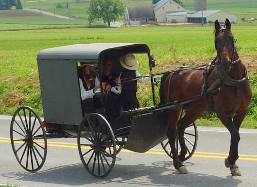 Amish Kutsche